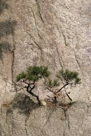tiny trees on a cliffside stock image image 7737281