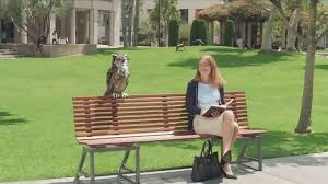 americas best owl commercial actress america s best contacts and eyeglasses tv commercial stop it