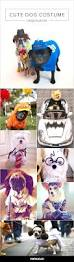 the most popular dog costumes popsugar pets best 20 geeky halloween costumes ideas on pinterest cute cat