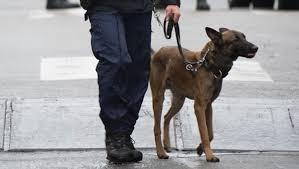 belgian shepherd killed french police dog killed by jihadists during paris raid