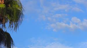 relaxing blue blue sky clouds palm relaxing background free hd video stock