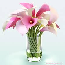 Calla Lily Flower Helina Flowers Google