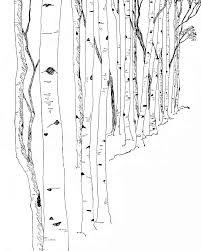 birch trees wall mural clip art library birch cliparts