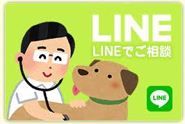 si鑒e auto jusqu タ quel ツge スタッフのブログ ことに動物病院 札幌市西区の動物病院 犬 猫