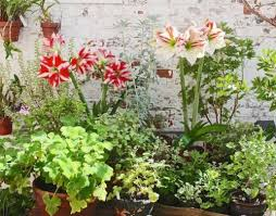 Fragrant Plants List - how to make a small fragrant garden fragrant plants for containers