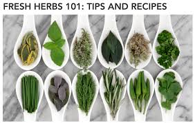 kitchen herbs 9 gadgets for your kitchen herbs lc living