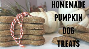 simple homemade pumpkin dog treats 2 ingredients youtube