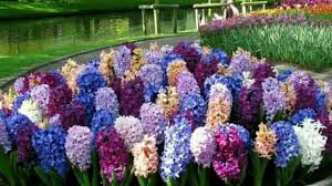most beautiful flower gardens in the world most beautiful flower