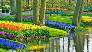 i want to see the flower gardens of holland travel the times