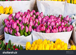 detail amsterdam flowers market best tulips stock photo 61205590