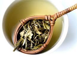 Teh Putih delapan manfaat yang didapatkan penggemar teh putih okezone lifestyle