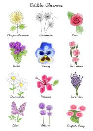 flowers names in english with pictures common spotted orchid seen