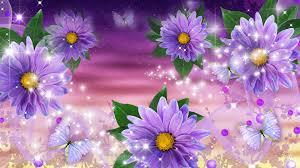 flower lavender gerberas flowers shine summer gerbera purple