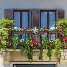 balkon grã npflanzen balkonpflanzen für schattige balkone wohn journal