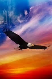 stellers sea eagle wallpapers drawn steller u0027s sea eagle flying eagle pencil and in color drawn