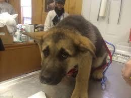 Dog At Vet Meme - photos show traumatised pets being taken to the vet or refusing to