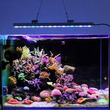freshwater aquarium coral reef aquarium design ideas