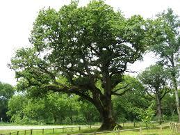 native plants of ireland a gallery of native irish trees green news ireland