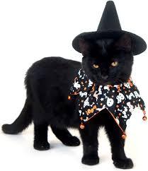 halloween cat halloween fluffy pumpkin 926 2560x1440 cat
