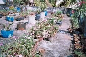 terrace gardening terrace gardening summer months nn s world of music