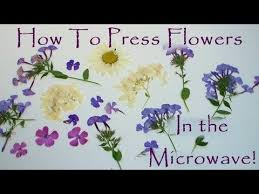 flower press how to press flowers in a microwave
