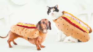 dog costumes spirit halloween halloween costumes for pets newsday
