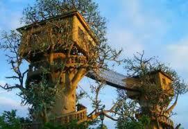 cool tree houses my top 10  Gallery  eBaums World