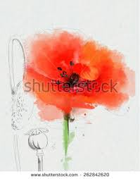 water color red poppy flowers painting stock illustration