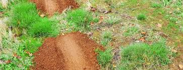 how to help get rid of pocket gophers terminix