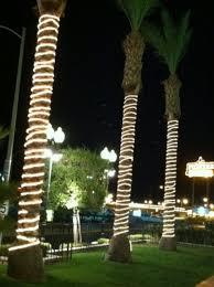 illuminating palm trees with led rope lights birddog lighting