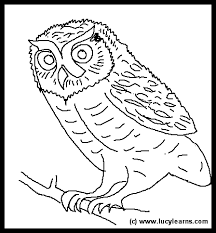 desert owl coloring page clipart owl pictures clipartmonk free clip art images