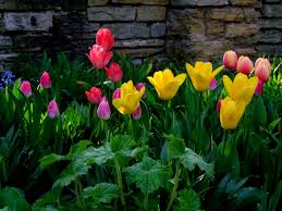 free images blossom bloom spring colourful color colorful