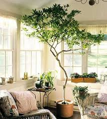 living room trees shining ideas living room tree simple stupendous artificial trees
