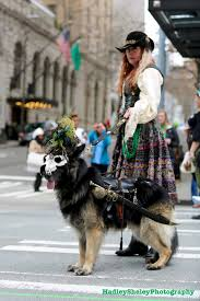belgian shepherd seattle has the seattle st patrick u0027s day parade gone to the dogs so