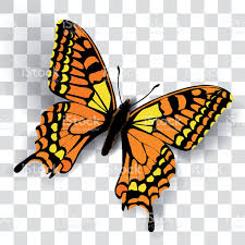 butterfly with shadow and noise stock vector more