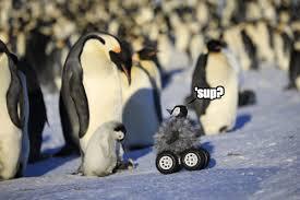 Cute Penguin Meme - the daily what penguins daily trending internet culture
