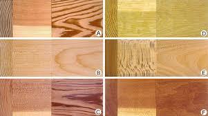 wood plant tissue britannica