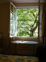 a fruit filled cherry tree outside the window room 34 dappled
