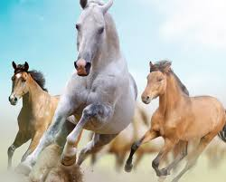 mustang horse running wallpaper horses running freedom hd picture image