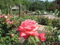 rose garden picture of harry p leu gardens orlando tripadvisor