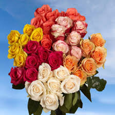 Different Color Roses 250 Red Roses Plus 250 Assorted Color Roses Great Deal Wholesale