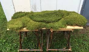 Moss Vase Filler Bulk Sheet Moss Feather Moss Approximately 8 Square Feet Live