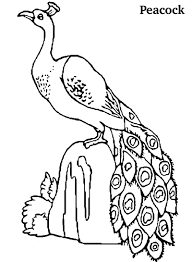 peacock printable coloring pages coloring me