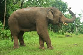 think elephants international a selection of elephant facts