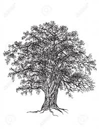 tree drawing black and white 1000 images about sketch on pinterest