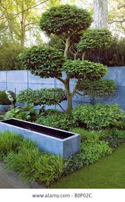 Topiary Cloud Trees - 107 best pruning conifers images on pinterest topiary garden