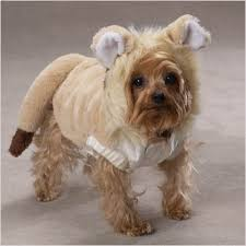 Lion Halloween Costumes Dogs 25 Lion Costume Dog Ideas Pet
