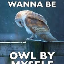 Owl Memes - sad owl meme feels the loneliness of a cold night