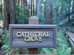 Muir Woods Map Muir Woods National Monument A Bay Area Oasis Kate The Globetrotter