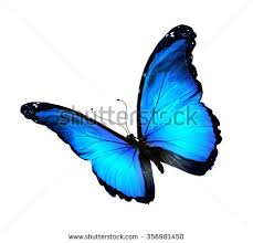blue butterfly stock images royalty free images vectors